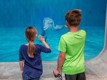 Real Florida Adventures Clearwater Beach & Marine Aquarium