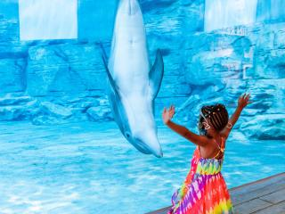 Clearwater Beach and Marine Aquarium