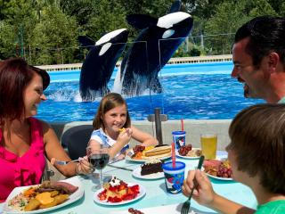 Dine with Killer Whales