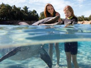 Discovery Cove with Dolphin Swim