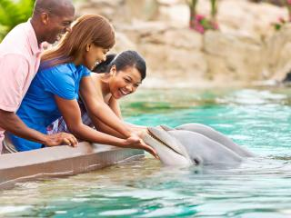 Dolphin Encounter at SeaWorld