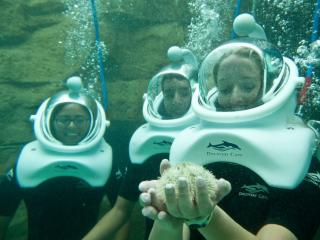 SeaVenture at Discovery Cove