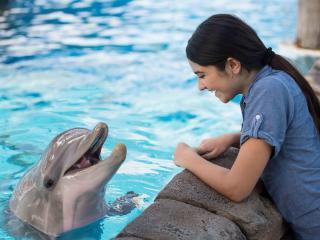 SeaWorld Orlando Dolphin Encounter