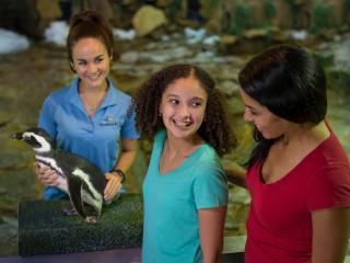 SeaWorld Penguin Encounter Ticket